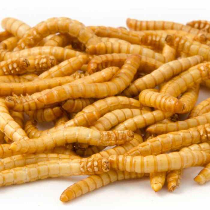 Freeze-Dried Mealworms (100g)