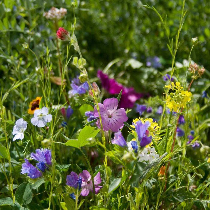 Schmetterlings-Blumenmischung