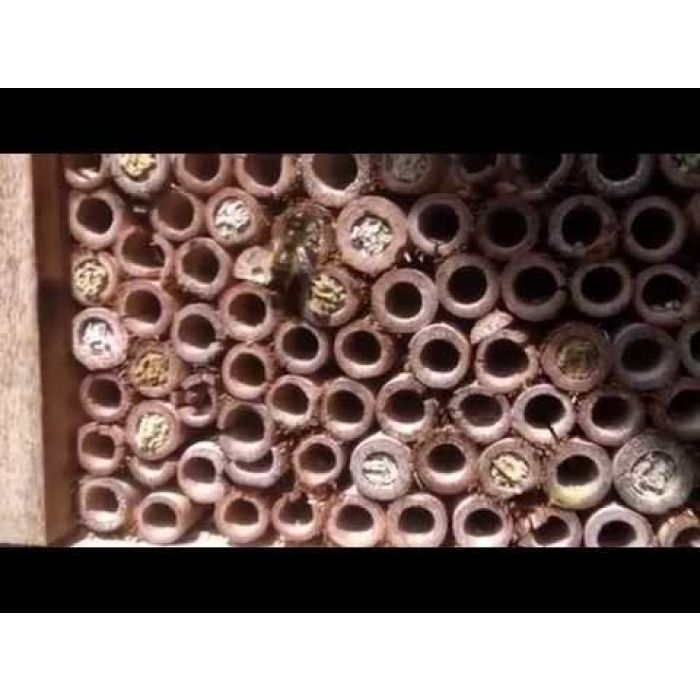 "Insektenhotel ""Capri"""