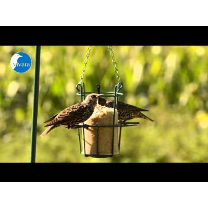 Energiekuchen mit Insekten (Futterkolben für Vögel 0,5 / 1l)