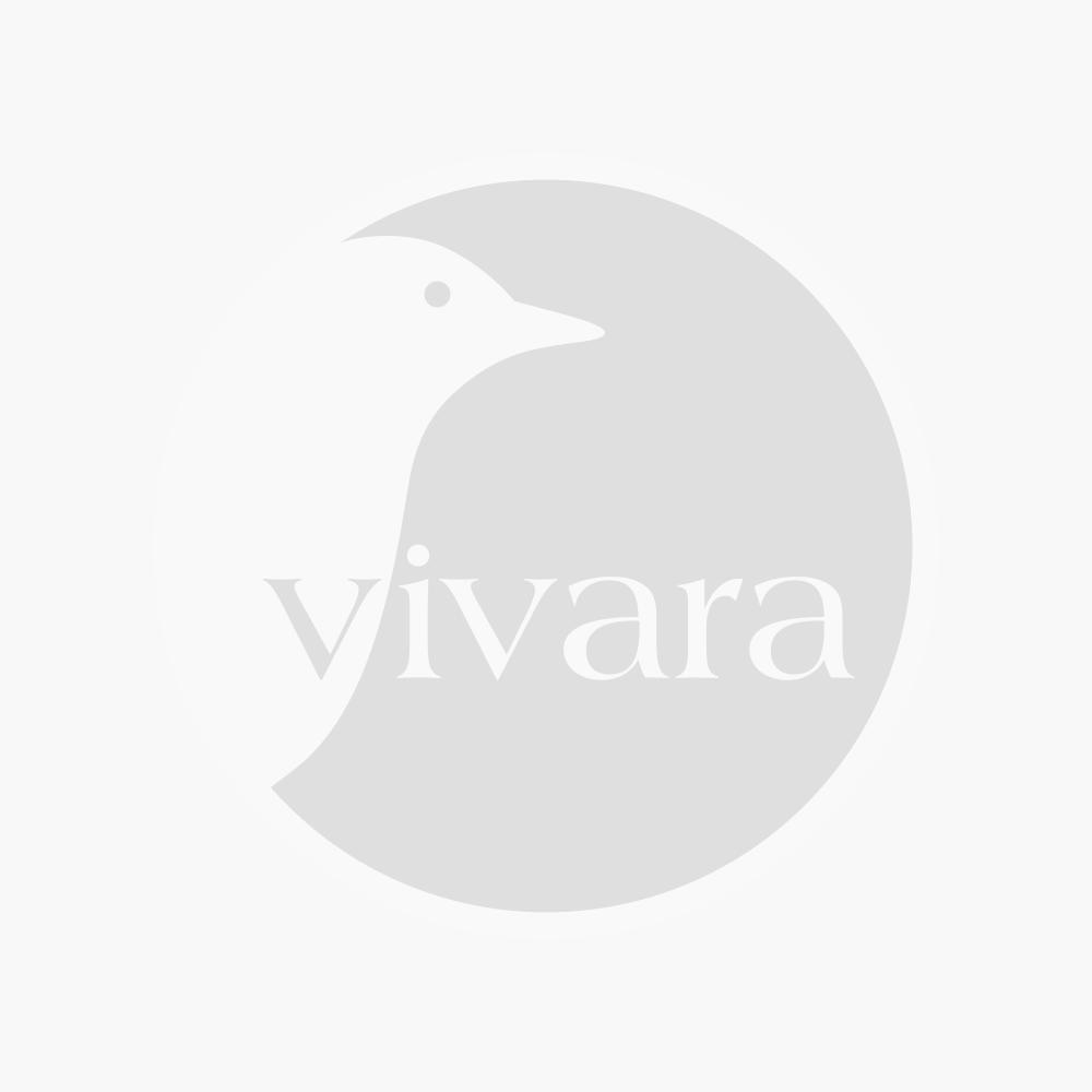 Karpaten Glockenblume (Campanula carpatica 'Alba')