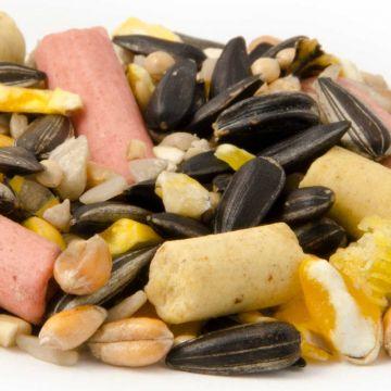 Table Seed Plus (10kg)