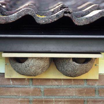 Kunstnistkasten Mehlschwalbe doppelt