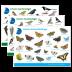 Tierkarten-Paket
