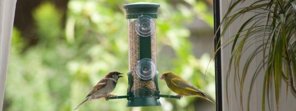 Verdauung – ist Fettfutter gefährlich für Jungvögel? Erhöhen Fenster-Futterhäuser die Wahrscheinlichkeit, dass Vögel gegen Scheiben fliegen?