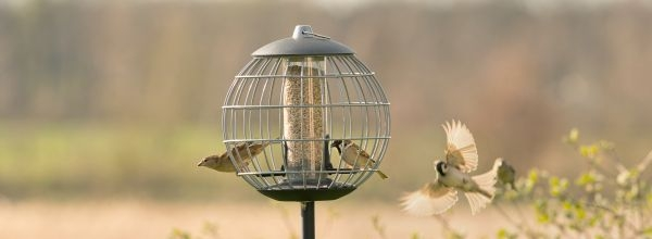 Futtersystem mit Schutzkäfig – nur kleine Vogelarten füttern!