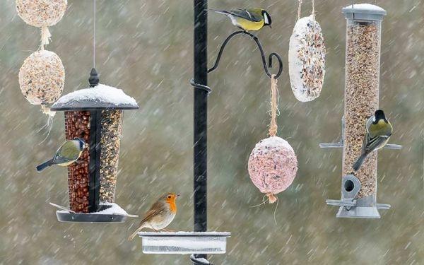 Ein Multifutterplatz wie das Pfahlsystem sorgt für Vogelvielfalt!