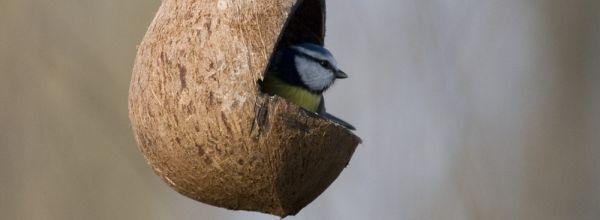 Verdauung – ist Fettfutter gefährlich für Jungvögel?