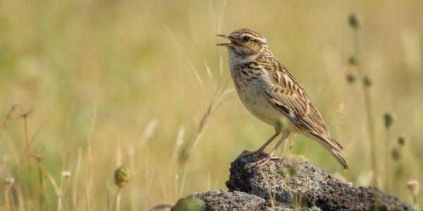 Welche Auswirkung hat ein trockener Sommer auf die Vogelwelt?