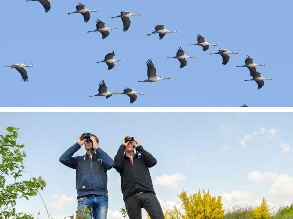 Vogelzug beobachten