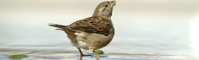 Vogeltränken dürfen im Sommer nicht fehlen -  Wichtig dabei: Auf Hygiene achten!