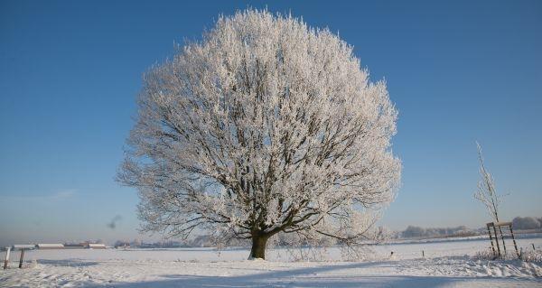 Winterzeit – Ruhezeit in der Natur