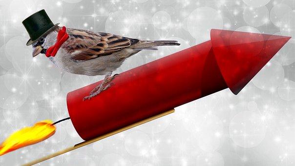 Wie gefährlich oder störend ist das Silvesterfeuerwerk für Vögel?
