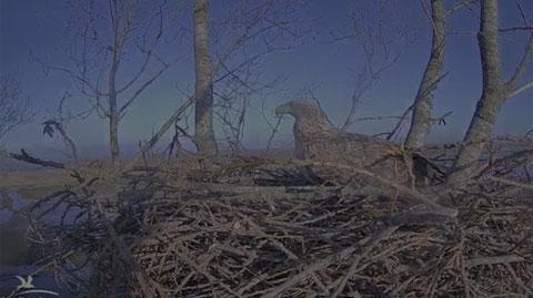 Seeadler Webcam