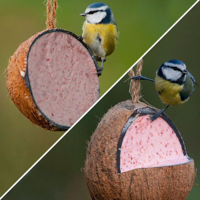 Gefüllte Kokosnuss mit Beeren