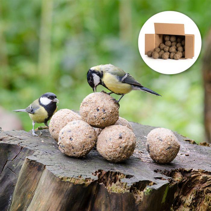 50 Insekten-Meisenknödel im Karton