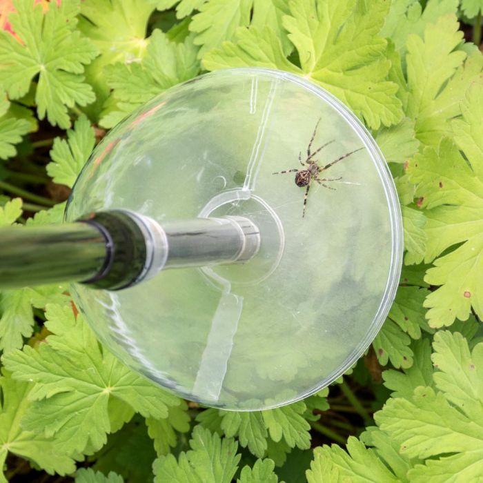 Insektenfänger/ Spinnenfänger Lang