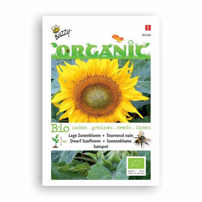 Buzzy® Organic Niedrige Sonnenblume Sunspot