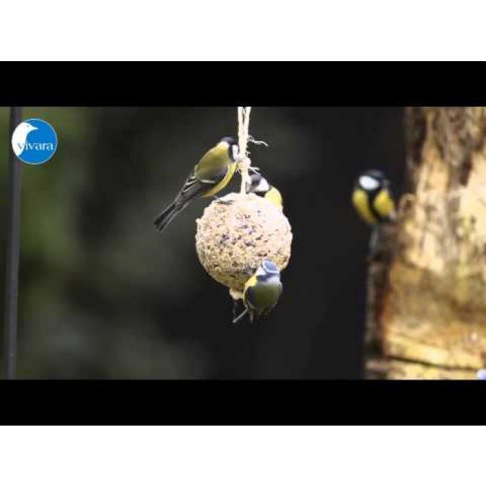 Großer Meisenknödel mit Insekten
