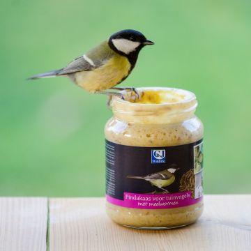 Gartenvögel-Erdnussbutter – mit Mehlwürmern