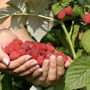 Obst und Kräuter
