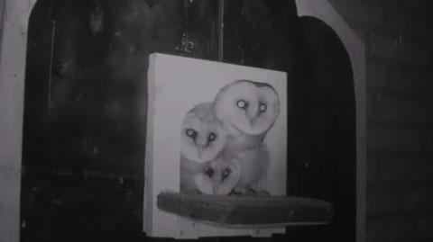 Schleiereule Webcam